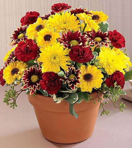Dundee florist thanksgiving ftd s autumn glory bouquet